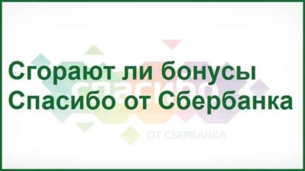 Пропали баллы-бонусы «Спасибо» от «Сбербанка России». Что предпринять?